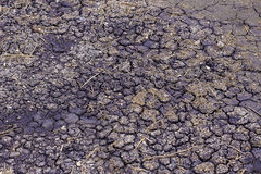 Pattern of mud ground surface cracked. The surface created a lot of cracked patterns from shrink mud after it dry. Royalty Free Stock Image
