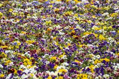 Pattern of multicolor flowers of garden. Summer background with many colorful flowers of a beautiful garden of Budapest Stock Image