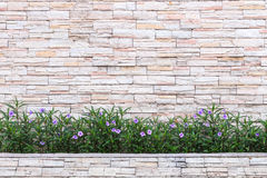 Pattern of natural stone wall and flower plant. Garden decorativ Stock Image
