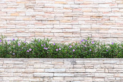 Pattern of natural stone wall and flower plant. Garden decorativ Stock Photography