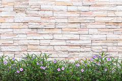 Pattern of natural stone wall and flower plant. Garden decorativ Royalty Free Stock Image
