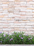 Pattern of natural stone wall and flower plant. Garden decorativ Stock Photo