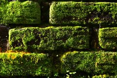 The Pattern of The Nature Stock Photography