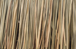 Pattern of Nipa palm Stock Image
