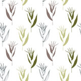 Pattern with oat grass. Stock Image