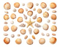 Free Pattern Of Exotic Sea Shells And Starfish Isolated On White Back Royalty Free Stock Images - 120342069