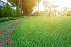 Free Pattern Of Laterite Steping Stone On A Green Lawn In The Public Park, Ficus And Shurb On The Left , Trees In Background Under Royalty Free Stock Image - 168267836