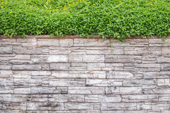 Free Pattern Of Natural Stone Wall And Green Ivy. Garden Decorative Stock Image - 74744301