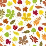 Pattern of orange leaves on white background. ECO autumn Nature wallpaper. BIO design Royalty Free Stock Photos
