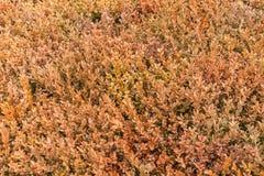 Pattern of orange plants. In a bush Royalty Free Stock Image