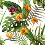 Pattern orchid hibiscus leaves watercolor tropics Royalty Free Stock Photo