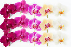 Pattern with orchids flowers on white. Background Royalty Free Stock Photos