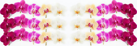 Pattern with orchids flowers on white. Background Stock Images