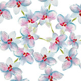 Pattern with orchids Stock Photography