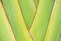 Pattern of ornamental banana branch Stock Images