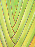 Pattern of ornamental banana Stock Images
