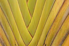 Pattern of ornamental banana Stock Photography