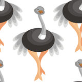 Pattern with ostriches Royalty Free Stock Photos
