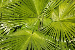 Pattern of palm leaves Stock Photos