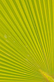 Pattern of palm leaves. Royalty Free Stock Photos