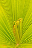 Pattern on the palm leaves. Stock Image