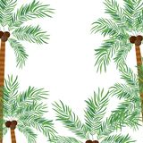 Pattern of palm tree with coconut in white background. Vector illustration design royalty free illustration