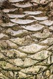 Pattern of palm tree trunk. vertical Photo Royalty Free Stock Photos