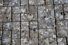 Pattern of park tile with bird poop. Texture Royalty Free Stock Images