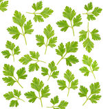 Pattern from parsley Stock Photos