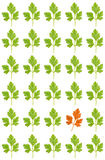 Pattern from parsley Stock Photo