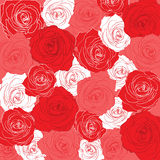 Pattern of passionate roses Stock Image