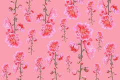 Pattern of Peach flower Royalty Free Stock Photo