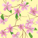 Pattern with peach flowers - vector Royalty Free Stock Photography
