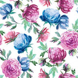 Pattern of peonies and leaves on white background. Seamless pattern of watercolor blue and red peonies and leaves on white background Royalty Free Stock Images