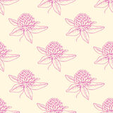 Pattern with pink clover flowers Royalty Free Stock Images