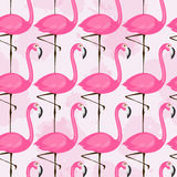 Pattern with pink flamingos. Vector seamless pattern with pink flamingos on light background Royalty Free Stock Photography