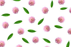 Pattern with pink flower buds, branches and leaves isolated Royalty Free Stock Images