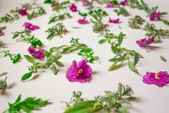Pattern of pink flowers, petals, leaves on a pink background. Flat lay, top view stock image