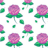 Pattern of pink roses Royalty Free Stock Photography