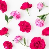 Pattern of pink roses, petals and peonies flowers on white background. Flat lay, Top view. Flowers texture. Pattern of pink roses, petals and peonies flowers on royalty free stock image