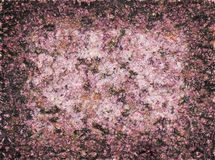 Pattern of pink stone Stock Image