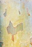 Pattern of plane tree Royalty Free Stock Photos