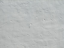 Pattern on plaster Royalty Free Stock Photography