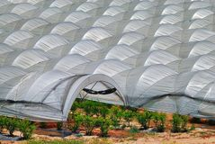 Pattern of plastic tensile like greenhouses showing one opening. A Central California sea of tent-like greenhouses built in long rows next to one another Royalty Free Stock Photos