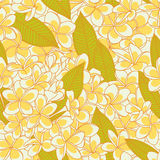 Pattern with plumeria flowers Stock Image