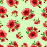Pattern poppies Stock Image