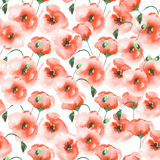 Pattern with a poppies Stock Images
