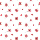 Pattern poppy flower Royalty Free Stock Images