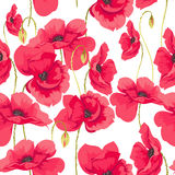 Pattern of poppy flowers. On a white background Stock Photography