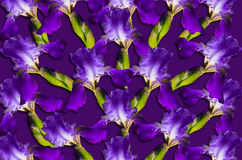 Pattern with purple iris flowers on a purple background Royalty Free Stock Photo